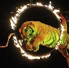 Цирки в Шаркане