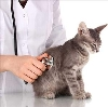 Ветеринарные клиники в Шаркане